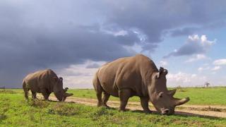 'گزارش سازمان ملل: بشر عامل 'انقراض ششم
