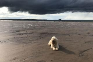 Dog at Belhaven Bay