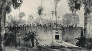 В Индии парсы отдают мёртвых на растерзание грифам в так называемых башнях молчания