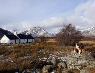 Glencoe dogs