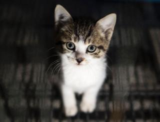 Котенок