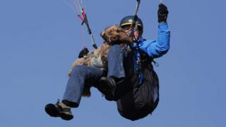 Henry the cockapoo paragliding