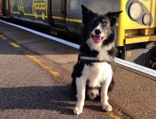 Mojo the police dog