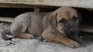 ခွေးကို လူတွေ အိမ်မှာ မွေးမြူလာတာ နှစ်ပေါင်း တသောင်းကျော်ပြီလို့ ရှေးဟောင်း သုတေသနပညာရှင်တွေကဆို