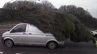 tree on van on A38