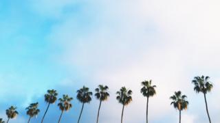Palmeras en Los Ángeles