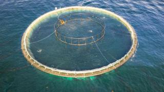 Salmon farm cage generic