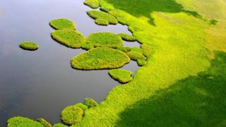 Mudanças climáticas: por que os pântanos africanos podem estar aumentando os níveis de metano na atmosfera