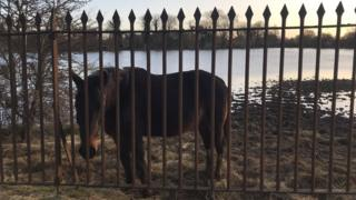 Horse in flooded field