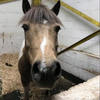 Pony called Lucky