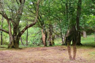 Sculptures standing in woodland