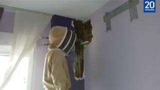 Beekeeper inspecting beehive behind a bedroom wall
