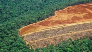 Trecho de floresta desmatado