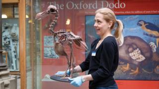 Dodo skeleton