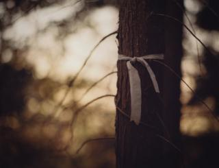 White ribbon tied around a tree