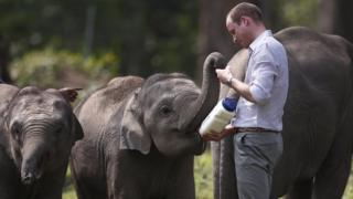 Prince William feeds baby Elephants in India