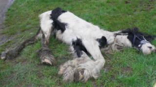 Dead horse found by RSPCA