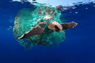 A loggerhead turtle entangled in a discarded plastic fishing net.