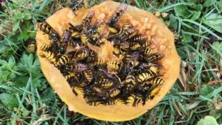 Wasps swarming all over an apple