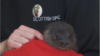 Elfie the otter cub