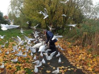 Pensioner feeding birds