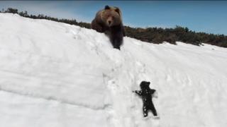 Un osito sube por un peñasco nevado intentando alcanzar a su madre