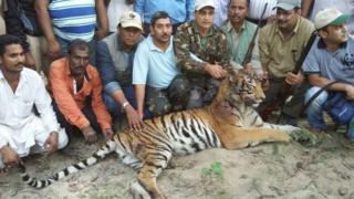 the shot tiger
