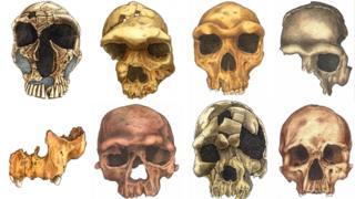 Ilustración de la evolución del rostro humano.