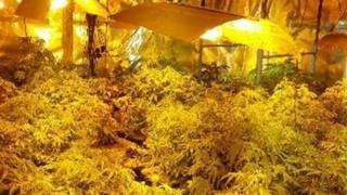 Cannabis farm, taken by PSNI