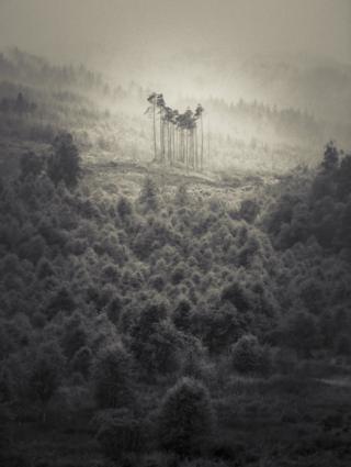 Una foto en blaco y negro de una colina cubierta de árboles.