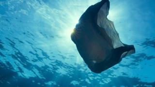 प्लास्टिक, समुद्री जीव