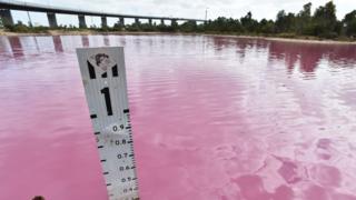 栩栩如生的粉色阴影是由大量阳光,雨水和温暖的气温共同造成。