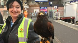 Falconer Julia Suthers and Harris hawk Romeo