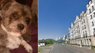 Eccles was stolen in Newhaven Place