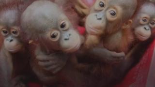 BM: 1 milyon canlı türü yok olma tehlikesi altında