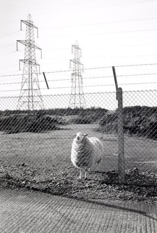 Blocked public footpath in MOD Land; Lydd, 1988