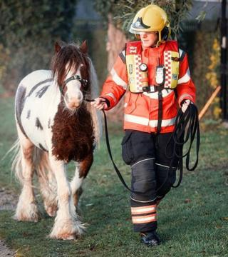 A firefighter with the pony