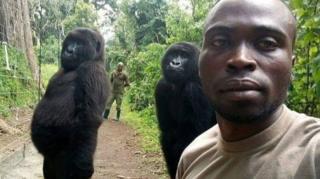 Рейнждери і горили