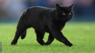 Чорний кіт на полі