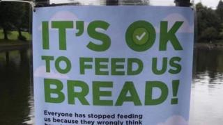 """Photo of sign saying: """"It's OK to feed us bread"""""""