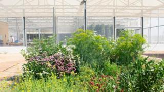 kebun, rumah kaca, Yordania