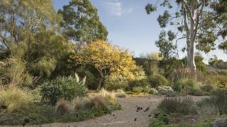 Beth Chatto's garden