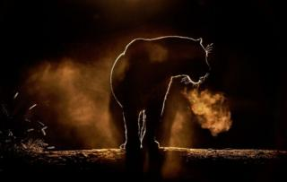 그레그 두 토이드가 촬영한 놀라운 아프리카 야생동물의 모습