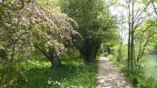 Towpath from Osney to Wolvercote