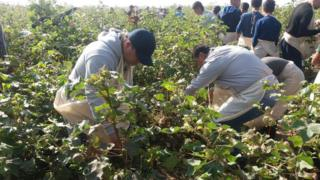 FC Andjon players harvesting cotton, Oct 2016