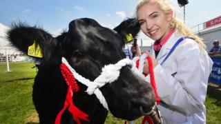 Tara O'Brien from Dungannon and her Commercial Heifer pictured during the annual Balmoral Show