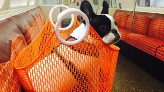 Dog on the Subway