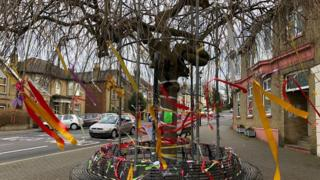 "The ""Umbrella Tree"" in Cowes"