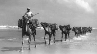 Караван верблюдов в Палестине в 1936 году