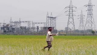 A farmer walks through a lush rice field in rural India with electricity pylons in the background